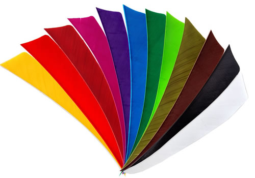 feather_color_solid